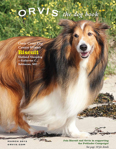 BISCUIT ORVIS COVER DOG