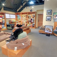 Biscuit - Orvis Flagship Store