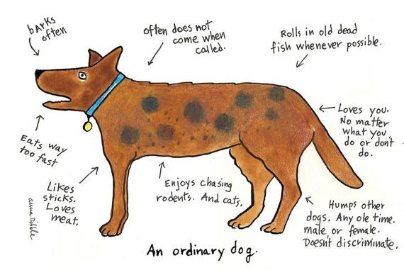 ordinarydog_0