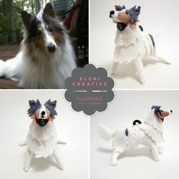 collie dog 4