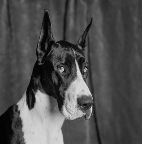 Dog_16-1