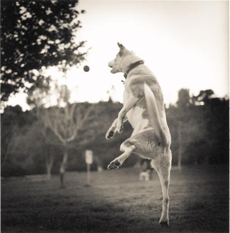 dog_park_2