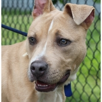 Baltimore Animal Care and Rescue Shelter (BARCS) -- Part II - Shelter dogs in need of furever homes