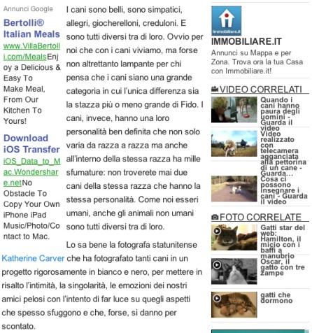 Pets Blog 2