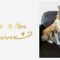 Honoring Biscuit: Introducing Victory -- the 'right' little sheltie Biscuit is sending to us!