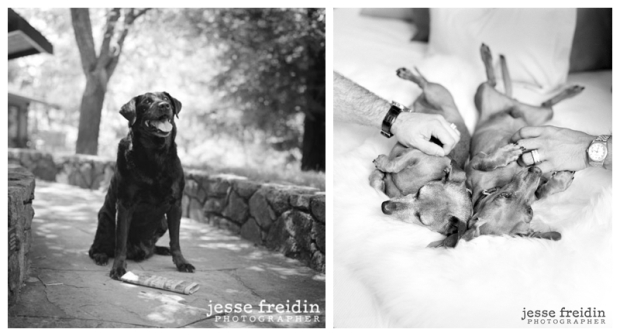 JesseFreidin.dogphotographer4