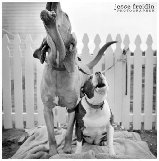 JesseFreidinphotography2