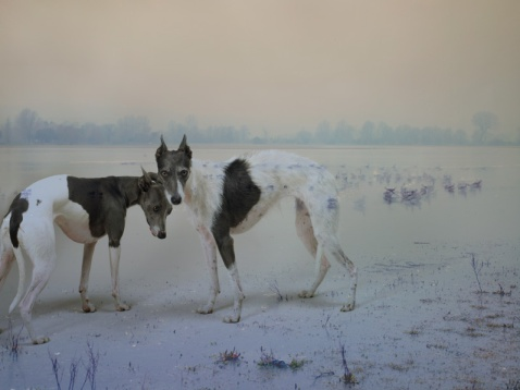 dolly and nora xvx copy