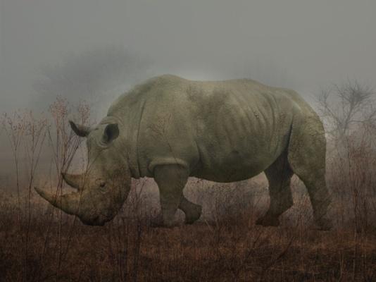 rhino monty xvx