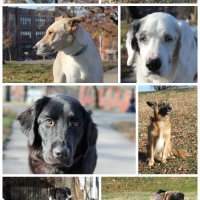 Tips for Photographing Shelter and Rescue Dogs