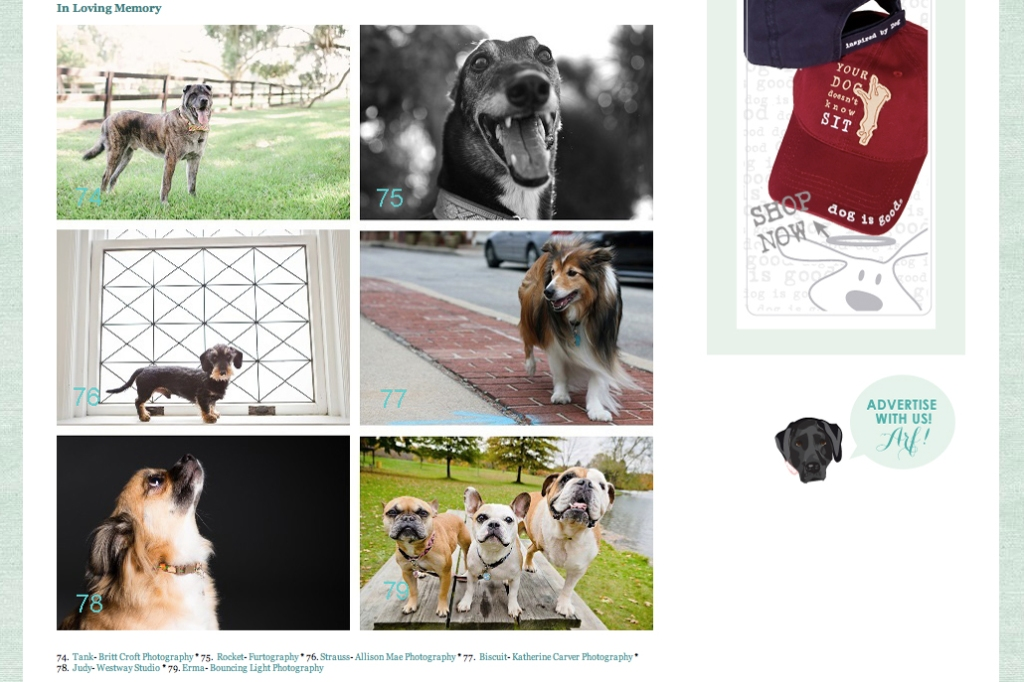 Daily Dog Tag 2 March 2014