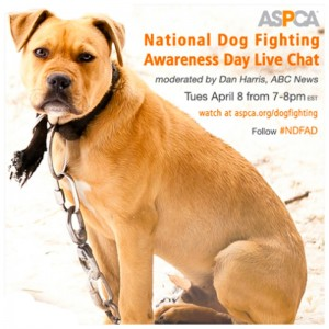 National Dog Fighting Awarenss Day ASPCA
