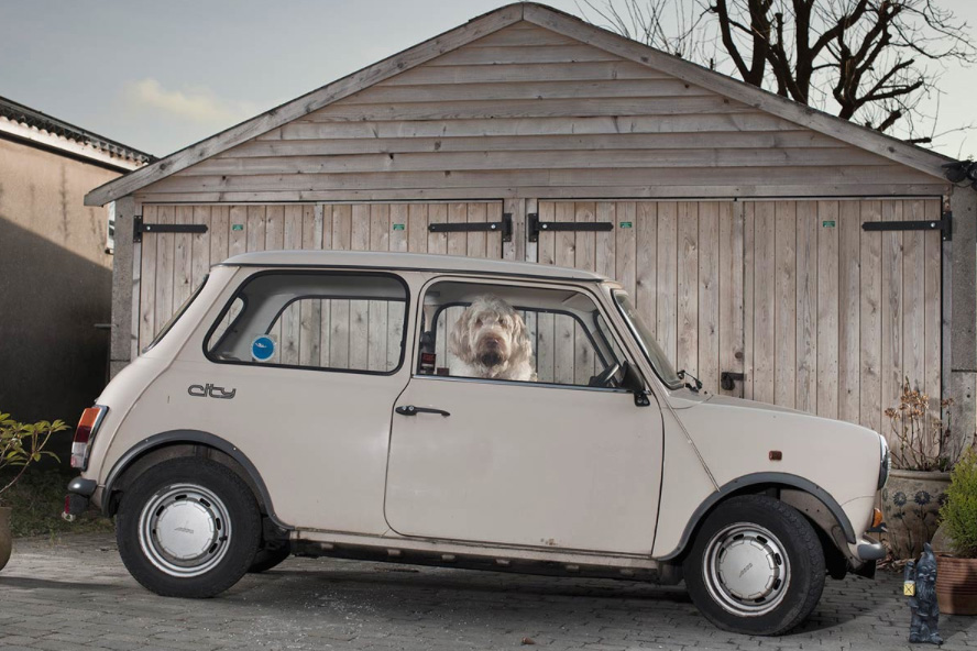 dogs in cars 6