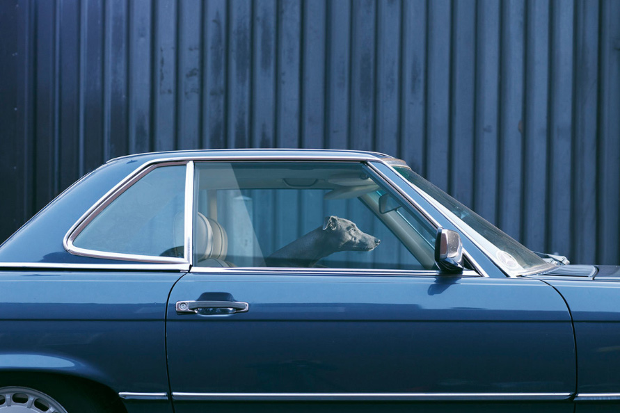 dogs in cars 8