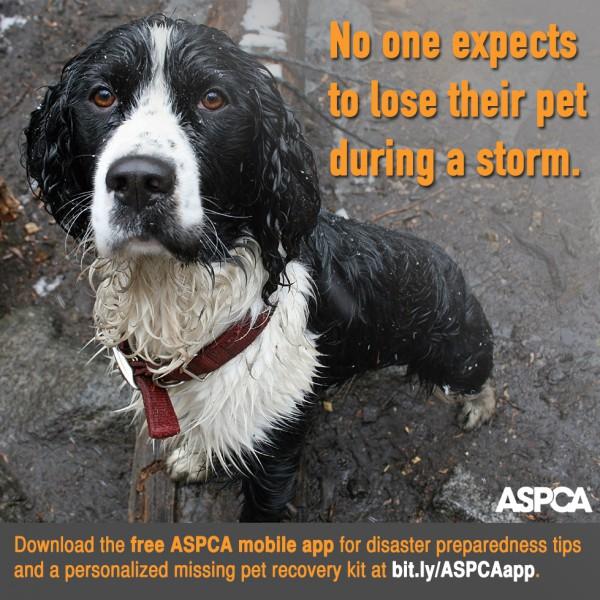 ASPCA DPM-Shareable-v2