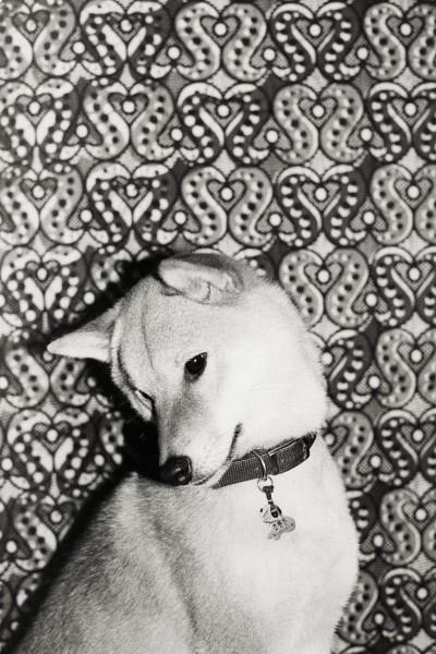 dogstalktous_10