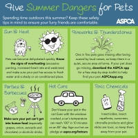 Tips: Five Summer Dangers for Furry Family Members