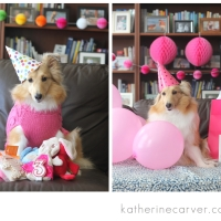 Planning a Birthday Theme for your Furry Family Member
