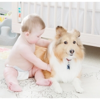 Information: Adopting a Rescue Dog
