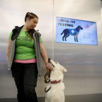 Finland: Coronavirus-sniffing dogs at Helsinki Airport